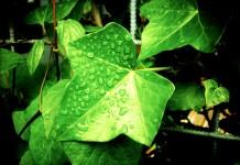 Plantes pour la médecine douce, le bien-être et la santé