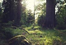 Nature immuable soin et guérison