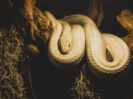 L'histoire de la corde et du serpent réalité conscience